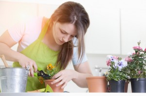 preturi-intretinere-plante